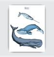 card with whale colorful vector image vector image