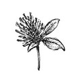 sketch flower isolated on white background vector image vector image