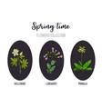 spring flowers set primula lungwort hellebore vector image vector image