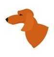 Dog head dachshund vector image vector image