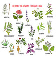 medicinal herbs for hair loss treatment vector image