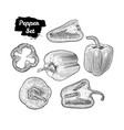 hand drawn sketch style bell pepper set isolated vector image vector image