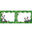 set panda frame vector image vector image