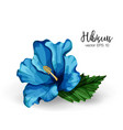 realistic hibiscus flower leaves blue vector image