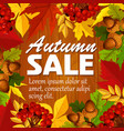 autumn sale poster leaf rowan berry acorn vector image vector image
