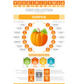food infographics poster pumpkin vegetable vector image vector image