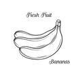 Hand drawn bananas icon vector image vector image
