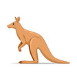 Kangaroo animal standing on a white background