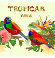 seamless border tropical birds euplectes vector image