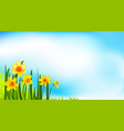 spring blossom banner with daffodils vector image