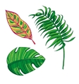 Tropical Leaves Collection Isolate vector image vector image