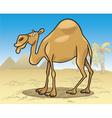 Cartoon illustration of dromedary camel on desert vector image