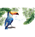 toucan watercolor tropic exotic summer vector image vector image