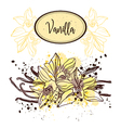 vanilla pods and flowers vector image vector image