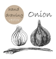 Hand Drawn onion Monochrome sketch vector image vector image