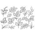 hand drawn set different leaves vector image