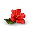 realistic hibiscus flower leaves red vector image vector image