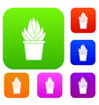 aloe vera plant set color collection vector image