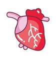heart organ with blood circulation for the veins vector image