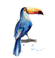 toucan watercolor summer card with parrots vector image vector image