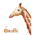 giraffe watercolor wildlife safari animals vector image