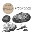 Hand Drawn potatoes Monochrome sketch vector image vector image