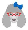 Portrait of poodle dog with glasses and bow in vector image