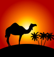 Silhouette of camel on the sunset background vector image vector image
