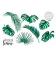 tropical leaves monstera palm set vector image