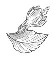 wild flower hibiscus plant isolated sketch fauna vector image vector image