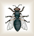 house fly vector image vector image