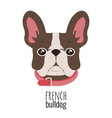 french bulldog face cute brown frenchie with vector image vector image