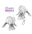 graphic of irises vector image vector image