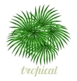 Paradise card with palms leaves Design for vector image vector image