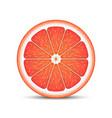 realistic grapefruit slice vector image vector image