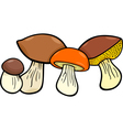 mushrooms food objects group vector image vector image