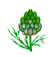 A Fresh Artichoke on A White Background vector image vector image