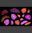 colorful tropical set palm leaves and branches vector image vector image