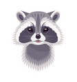 funny raccoon portrait on white vector image