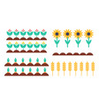 garden bed of bush sunflower and spica set vector image vector image