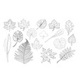 hand drawn leaves collection vector image