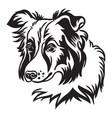 image border collie dog on white background vector image vector image