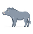 warthog animal standing on a white background vector image vector image