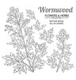 wormwood plant set on white background vector image vector image