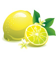 Lemon with leaves and flowers vector image vector image