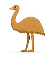 ostrich emu bird on a white background vector image vector image