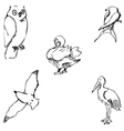 Birds Pencil sketch by hand vector image vector image