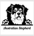 dog head australian shepherd breed black