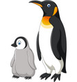 cartoon mother and baby penguin isolated on white vector image vector image