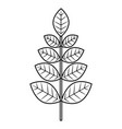 leaves branch decoration natural image vector image